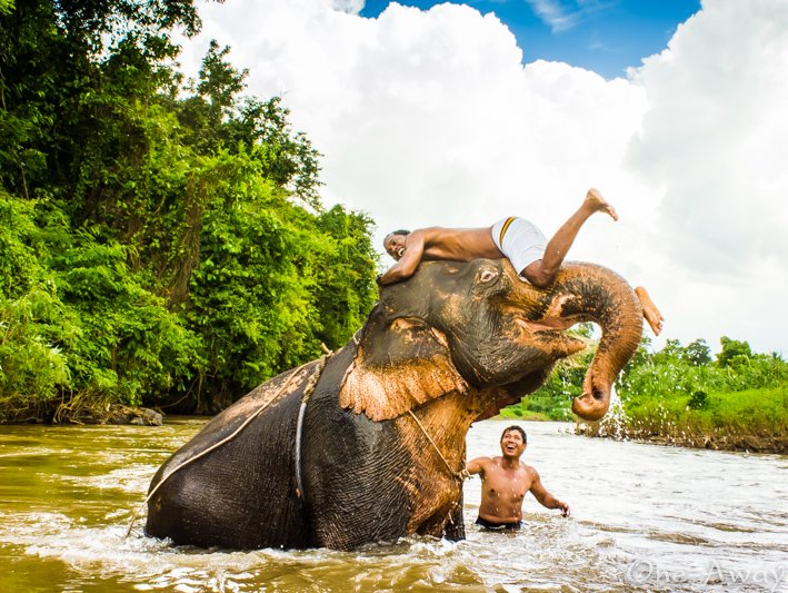 Things To Do In Pai - Bathe With Elephants!